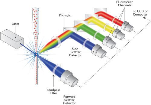 Durchflusszytometrie