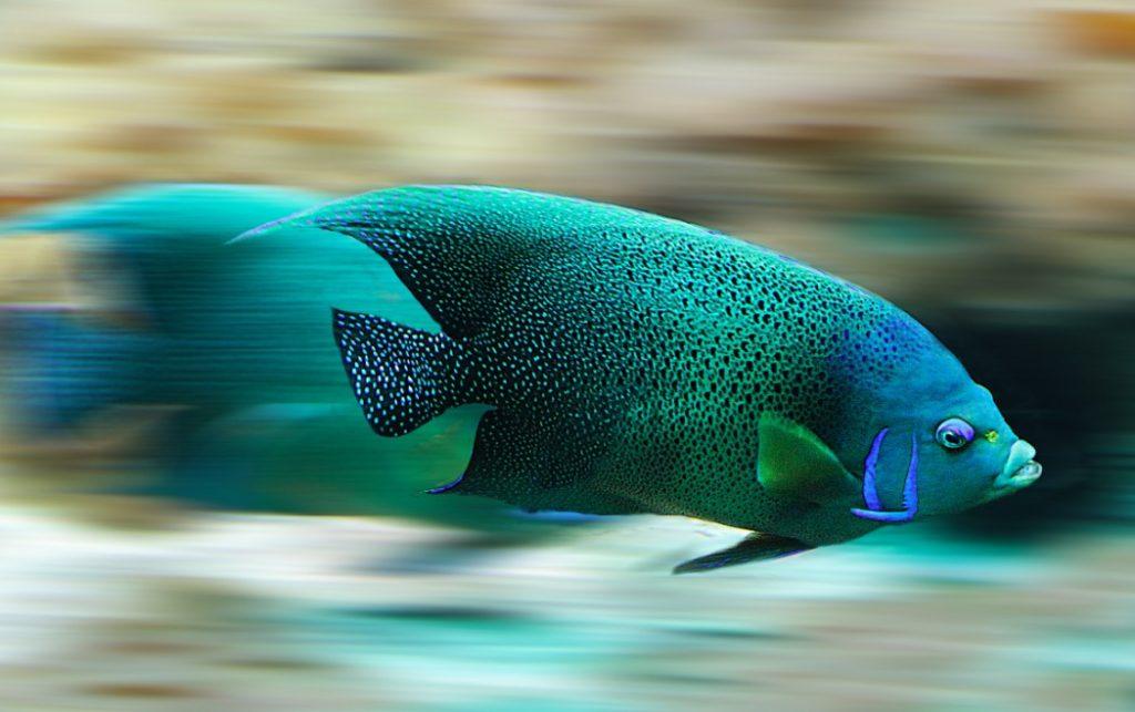 Fish stinkt vom Kopf